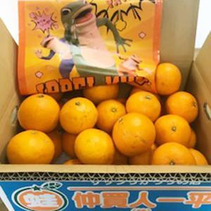清見タンゴール(規格外) 5キロ|aisato