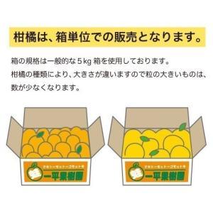 真穴みかん風の舞(正品)5キロ【出荷は11月末頃から随時発送】 aisato 02