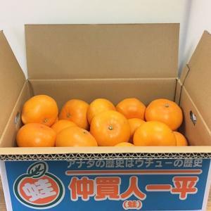 せとか(規格外)2019.10.25TSUTAYA  O-CRESTチケットセット ※2月中旬より順次発送開始|aisato