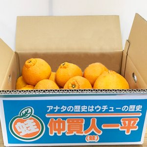不知火(デコ○ン)規格外 5k|aisato