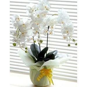 光触媒 胡蝶蘭 ホワイト|aisol33