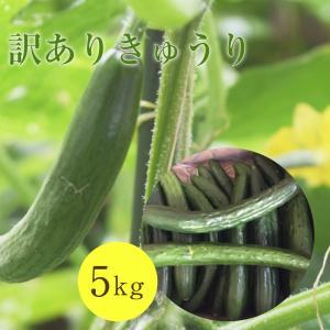 訳ありきゅうり 5kg|aizu-furusato