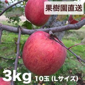 樹上完熟【会津産】ふじリンゴ 3kg 10玉(Lサイズ)|aizu-iimono