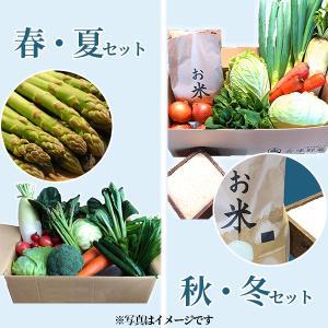 喜多方アスパラ野菜セット(大)1回(10〜12品目)4名様1週間分相当