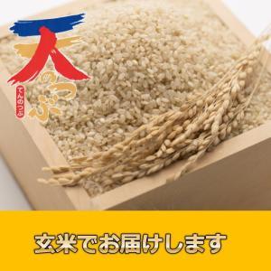 米 お米 5kg 玄米 2年産新米 会津米 天のつぶ Aランク一等米使用   中部地方までの本州地域送料無料|aizukome