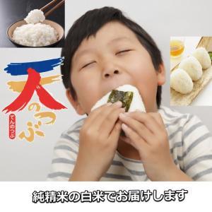 米 お米 5kg×2袋 白米 1年産 純精米 会津米 天のつぶ Aランク一等米使用  中部地方までの本州地域送料無料|aizukome