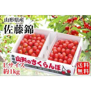 露地栽培 最盛期佐藤錦 バラ詰約1kg Lサイズ(61-B)...