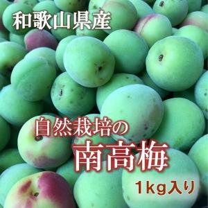 【南高梅1kg】自然栽培 青梅|ak-friend