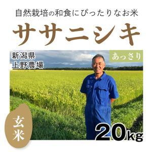 【玄米20kg】新潟県「上野農場」のササニシキ 自然栽培・玄米