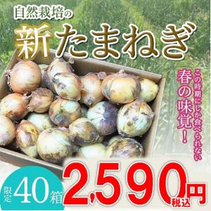 40箱限定!【1箱 5kg】自然栽培 新玉ねぎ|ak-friend