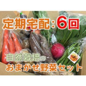 【定期宅配:6回】自然栽培 旬の野菜セットおまかせコース...
