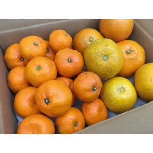 柑橘食べ比べセット|ak-friend