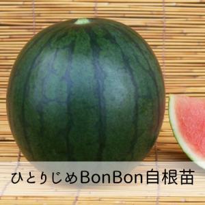 ひとりじめBonBon苗 9cm白ポット ...