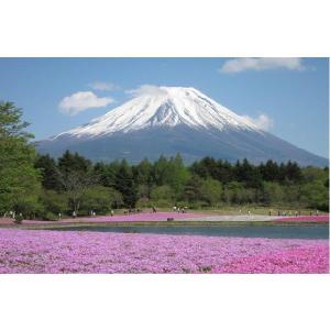 風呂ポスター 風景 富士山ー芝桜|akagilace-poster