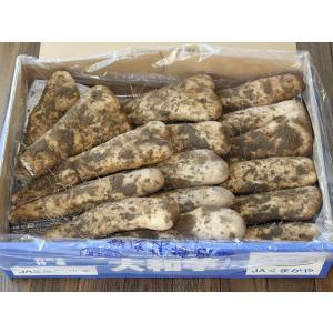 大和芋(やまといも) 4kg 山芋 とろろ 農家直送 ギフトBOX入り|akaishinoen