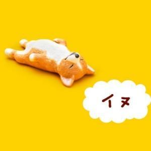 イヌ 【 ガチャポン パンダの穴 Zoo Zoo Zoo 第1弾 もうしら寝 】 タカラトミーアーツ akism