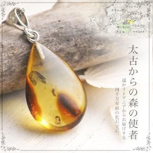虫入り琥珀ネックレス 送料無料 シルバー Silver925 コレクションランク チェーン別売り musi290|akubixy