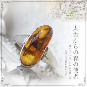 癒しの宝石 天然琥珀 虫入り琥珀リング・指輪 送料無料 パワーストーン 天然石 お守り シルバー Silver925 コレクションランク musi372|akubixy