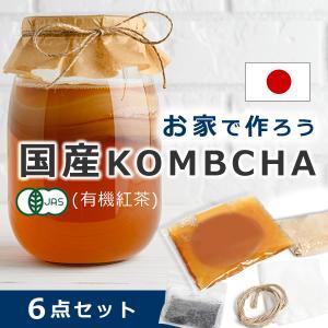 コンブチャクレンズ コンブチャ キット スコビー スコービー 紅茶キノコ 株 こんぶ茶 scoby ...