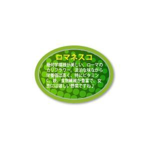 ロマネスコ シール 450枚入り vegetable3345|alucia