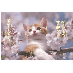 ACTIVE COOPRATION/ アクティブコーポレーションポストカード〜桜で木登りにゃんこ|amac-store