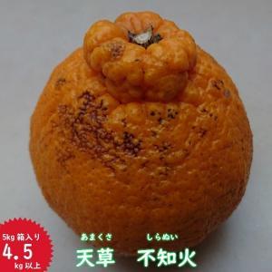 訳あり天草不知火5kg箱入り(あまくさしらぬい)|amakusaichiba