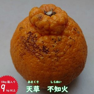 訳あり天草不知火10kg箱入り(あまくさしらぬい)|amakusaichiba
