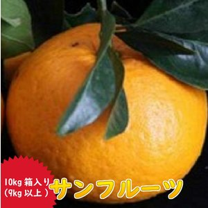 サンフルーツ(新甘夏)農薬一切不使用栽培|amakusaichiba
