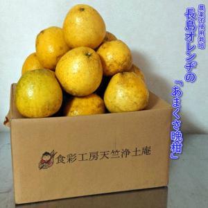 味に定評のある「長島オレンヂ」が農薬を一切使用せず栽培した「あまくさ晩柑」です。果皮の変色やキズはカ...