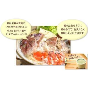 鯛ちり鍋|amakusakaisen-amarei|04