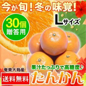 奄美大島 たんかん タンカン 贈答用 Lサイズ 30個入|amami-osima
