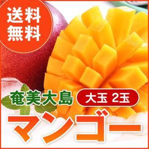 奄美大島 マンゴー 大玉 2玉 冷蔵|amami-osima