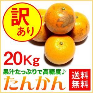 奄美大島 訳あり たんかん タンカン みかん ご家庭用 20kg|amami-osima