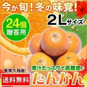 奄美大島 たんかん タンカン 贈答用 2Lサイズ 24個入り|amami-osima