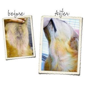 プロバイオCa:ペットの口臭・体臭・便臭、アトピー、アレルギーに。:顆粒2g×30包 (約30日分)|amanagrace|05