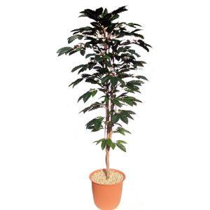コーヒーの木 (人工観葉植物 インテリア 造花 180cm)