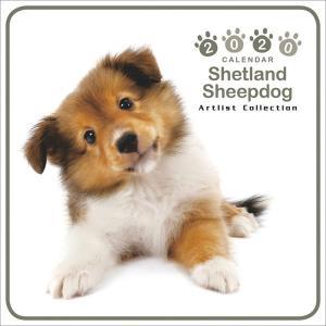 2020年 ミニカレンダー シェットランドシープドッグの商品画像|ナビ