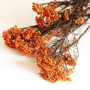 ライスフラワー オレンジ(60g入) <プリザーブドフラワー・フラワーアレンジメント・花材・花資材>
