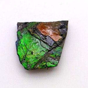アンモライト かけら 欠片 標本にどうぞ パワーストーン お守り 天然石 化石 1532|ammolite-museum