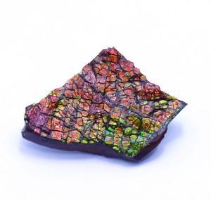 アンモライト かけら 欠片 標本にどうぞ パワーストーン お守り 天然石 化石 1619|ammolite-museum