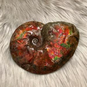 カナディアン アンモライト 原石 ハイグレード (26-333)|ammolite-museum