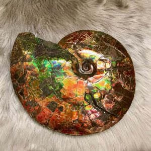 カナディアン アンモライト 原石 トップグレード (82-696)|ammolite-museum