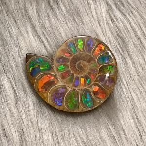 アンモナイト  スライス 化石 ペア アンモナイトアンモライト-5|ammolite-museum