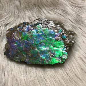 アンモライト かけら 欠片 L 標本にどうぞ パワーストーン お守り 天然石 化石 L1403|ammolite-museum