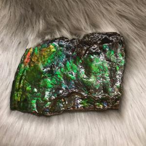 アンモライト かけら 欠片 L 標本にどうぞ パワーストーン お守り 天然石 化石 L1406|ammolite-museum