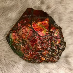 アンモライト かけら 欠片 標本にどうぞ パワーストーン お守り 天然石 化石 L1701|ammolite-museum