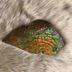 アンモライト かけら 欠片 LL 標本にどうぞ パワーストーン お守り 天然石 化石 L1702|ammolite-museum