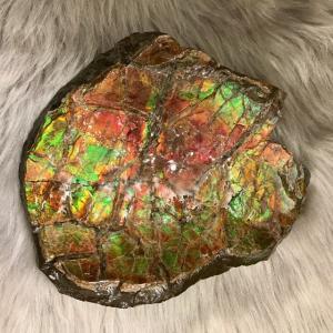 アンモライト かけら 欠片 LL 標本にどうぞ パワーストーン お守り 天然石 化石 L1705|ammolite-museum
