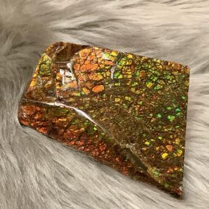 アンモライト かけら 欠片 M 標本にどうぞ パワーストーン お守り 天然石 化石 L1710 ammolite-museum