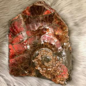 アンモライト かけら 欠片 LL 標本にどうぞ パワーストーン お守り 天然石 化石 L1713|ammolite-museum